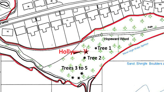 Trees Damaged in Hopeward Wood: Appeal for information