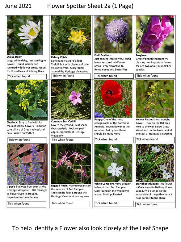Flower spotter sheet 2a.jpg
