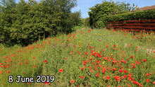 Flowers at the Heritage Viewpoint -  Spring versus Autumn seed sowing and  Spring Drought