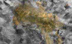 Screen Shot 2019-06-05 at 18.30.15_edite