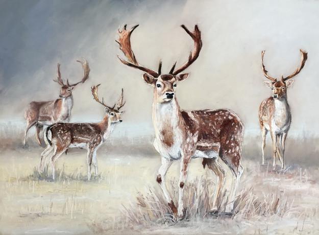 Deer herd 1