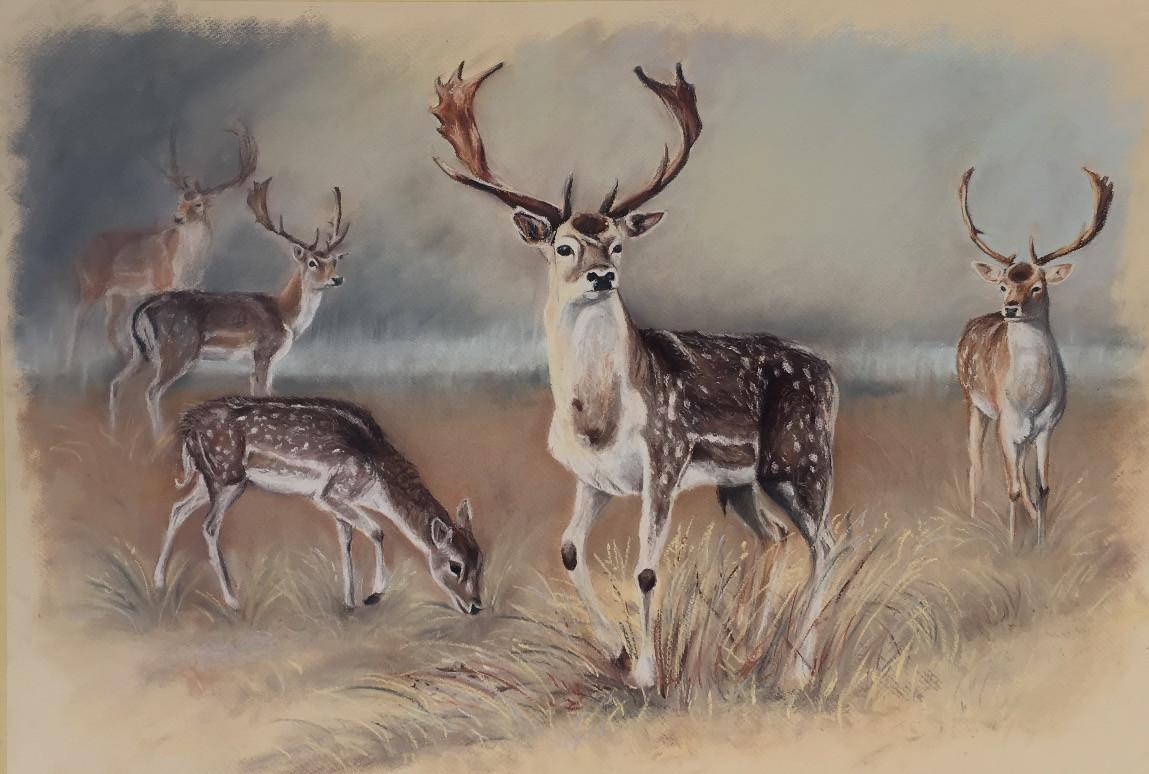 Deer herd 2