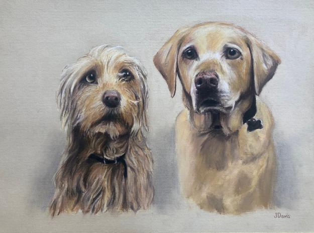 Pet Duo