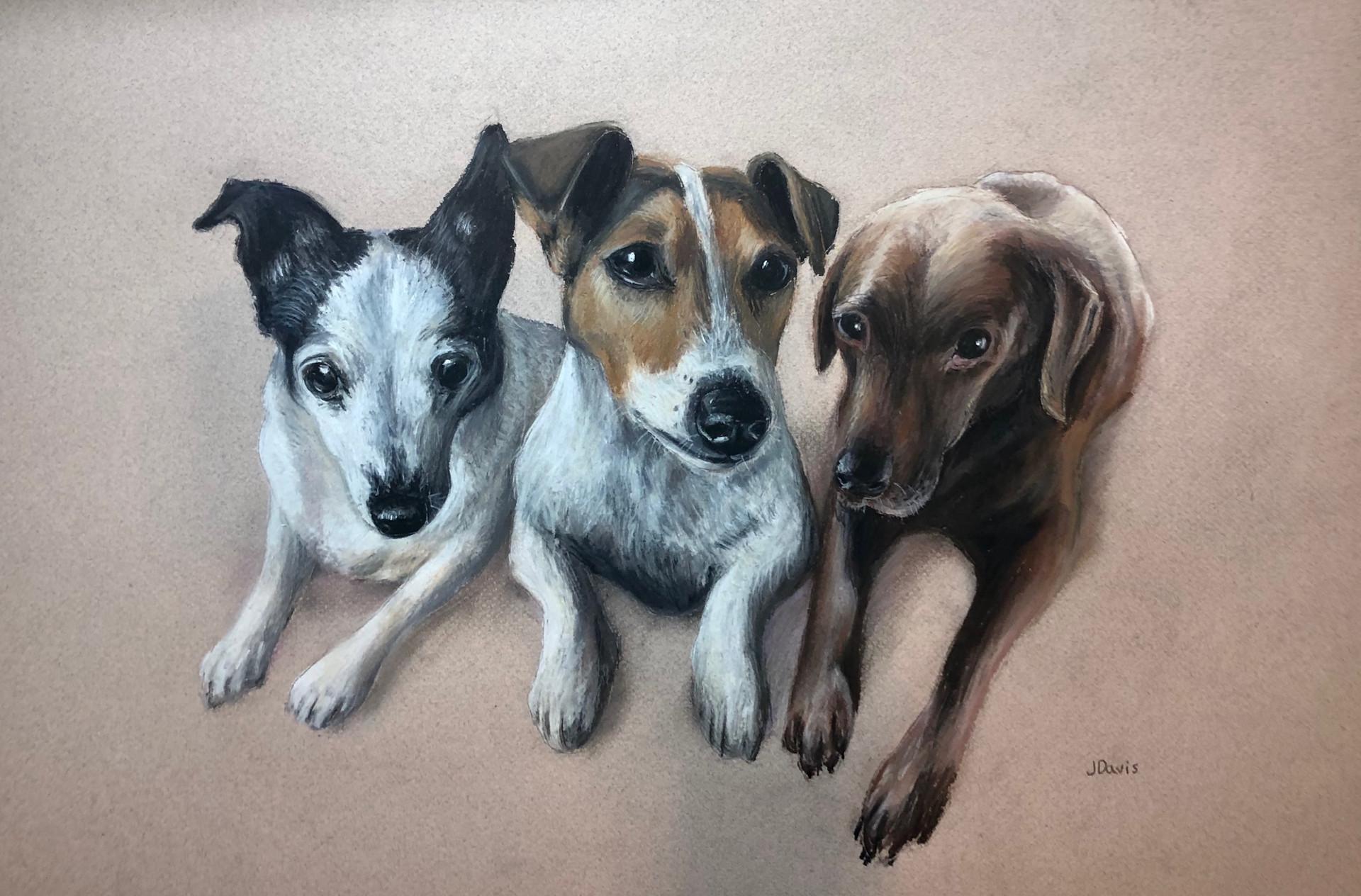Pet trio