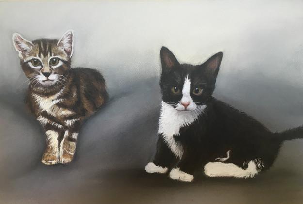 ***Kittens