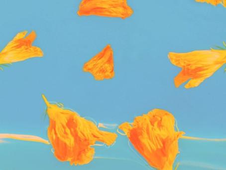LIEZA - Yellow Roses