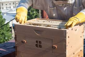 urban beekeeper.jpg