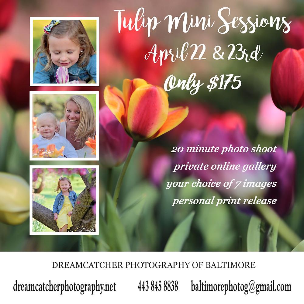 tulip mini sessions baltimore