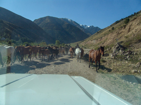 Horses in the mountains of Kyrgyzstan