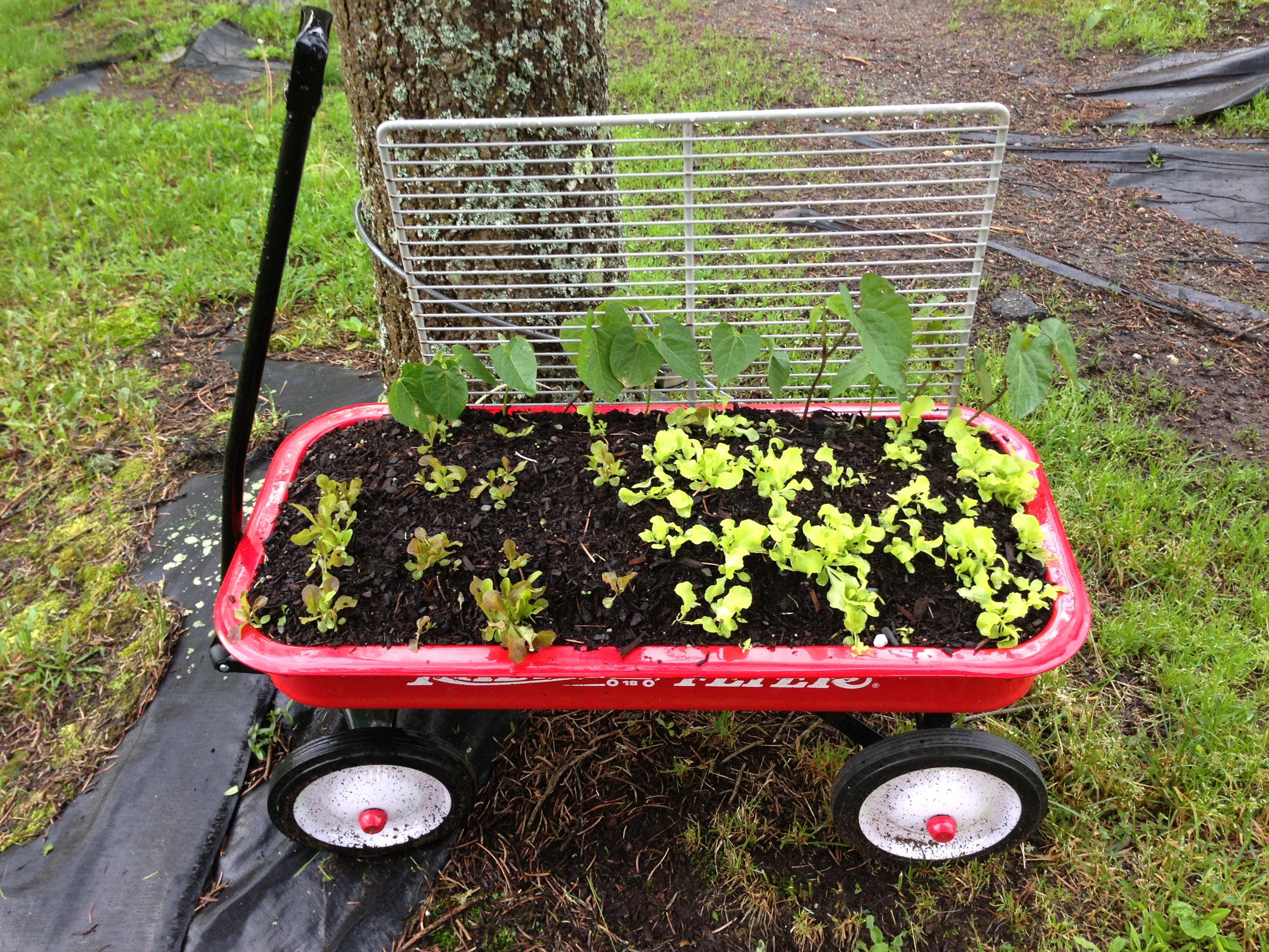 spaz.lab mobile garden
