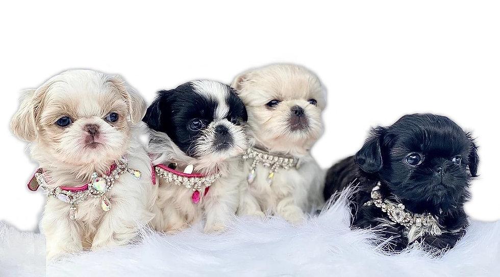 Puppies 2b.jpg