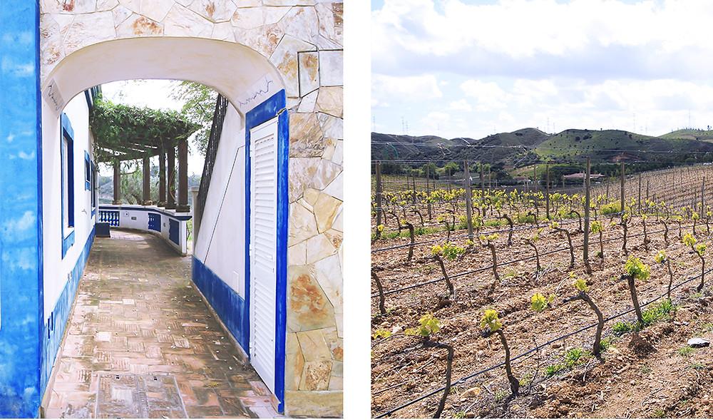 The wine estate and vineyards at Quinta do Francês, Silves, Algarve