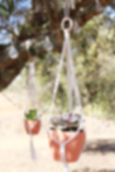 2 macrame plant hanger with plants hanging from an olive tree in Algarve