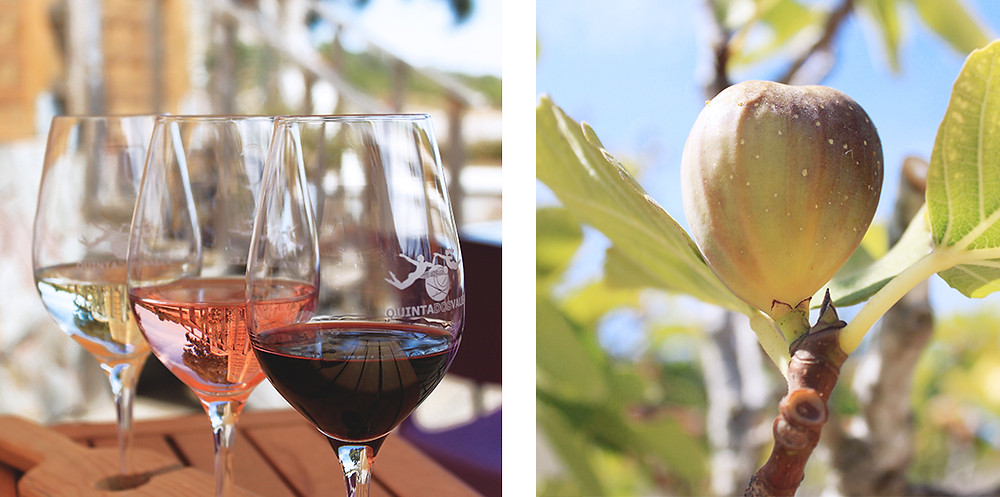 Wine tour and wine tasting at local winery in Algarve