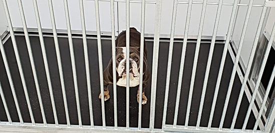BULLDOG KENNEL.jpg