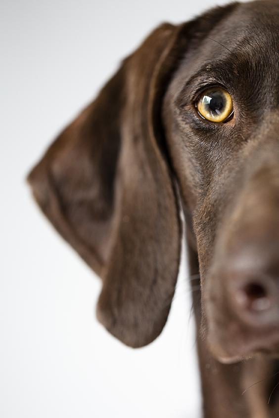 koiravalokuvaus- koirakuvat- helsinki- l