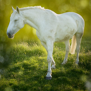 Horses and Pets by Spectral Waves Photography