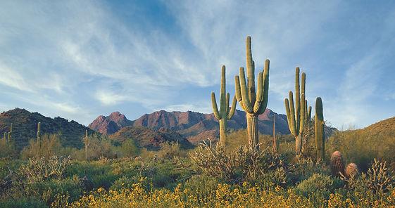 Scottsdale desert.jpg