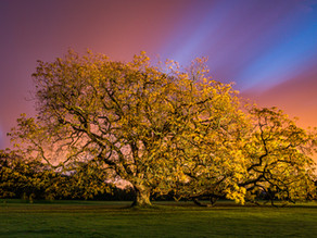 Back to his roots! Photographer Adrian Houston's, A Portrait of the Tree