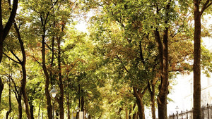 Vienna – One of the greenest cities in the world