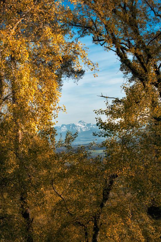 Herbst-Natur-2.jpg