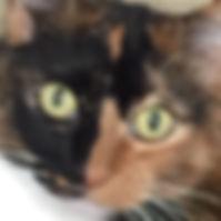 support kitty.jpg