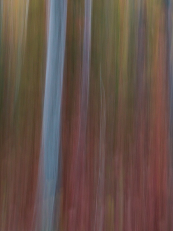 Forest Fall Abstract