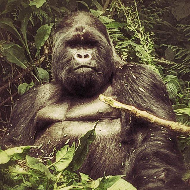 King (f'ing) Kong...jpg