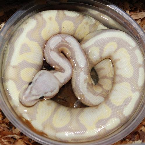 Super Pastel Banana