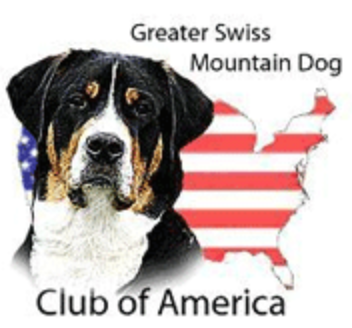 greater swiss mountain dog club of america - 500×468