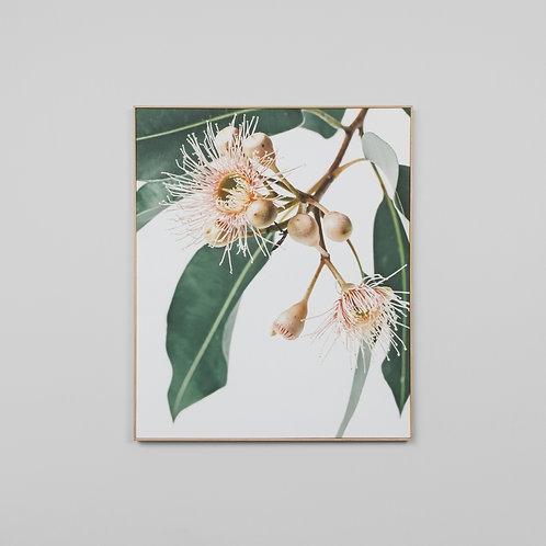 Eucalyptus Flower 2