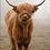 Thumbnail: Bovine Calf 100 x 80