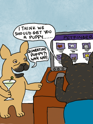 Heather & the Quarantine Pups_10