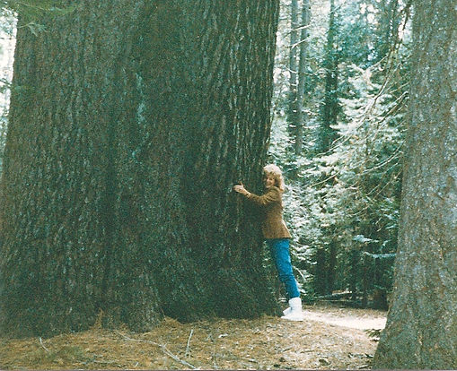 LB REDWOOD FOREST0004.jpg
