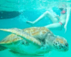 deep sea fishing coastal snorkelling turtle tours in barbados