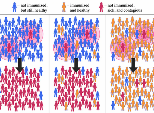 The term 'herd immunity' - what does it really mean?