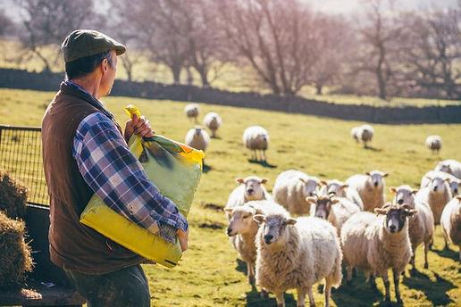 farmer-uk-bafb0a0.jpg