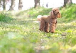 愛犬撮影, 犬, 公園, 出張撮影, ロケーション撮影