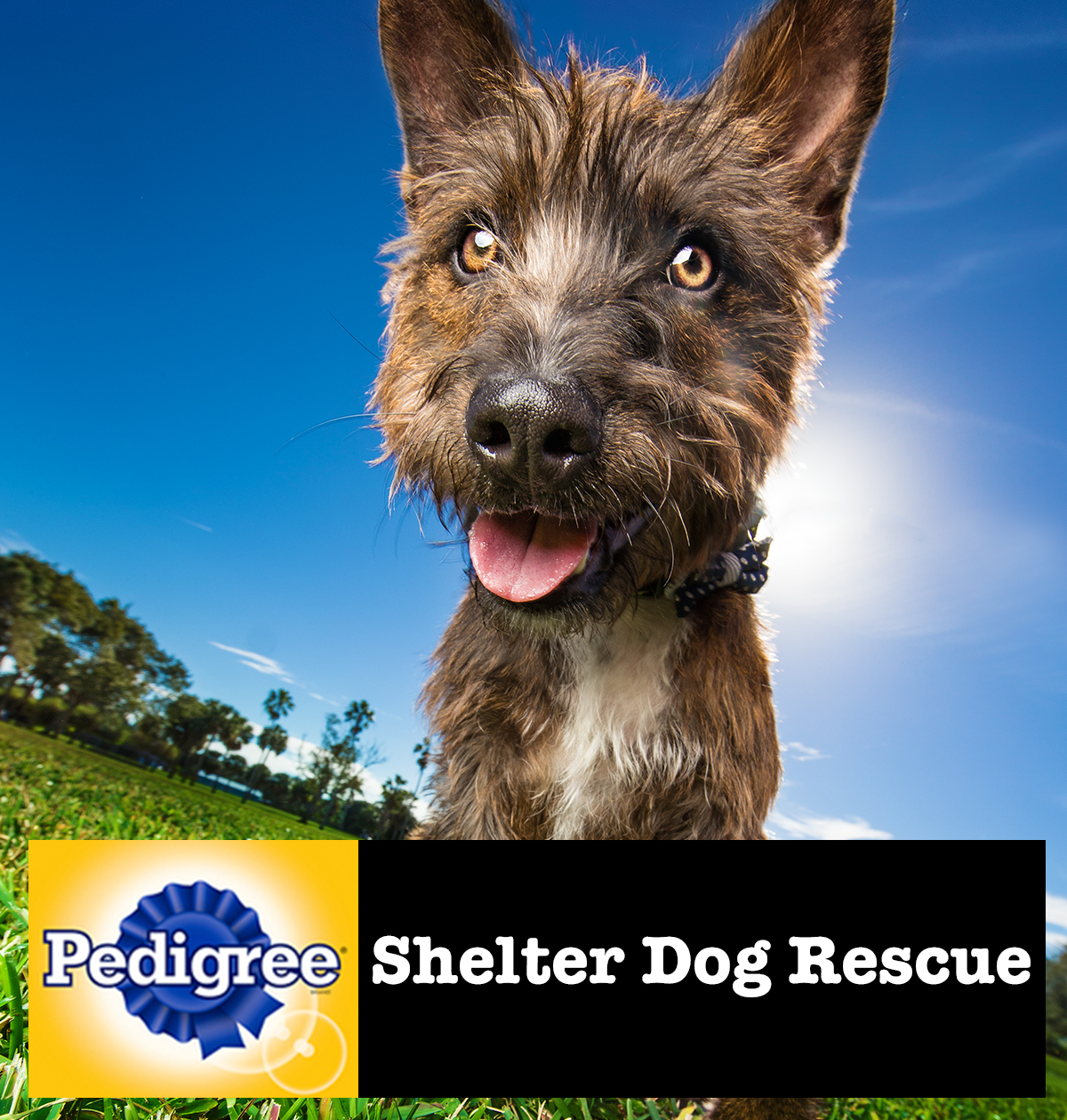 pedigree-shelter-dogs