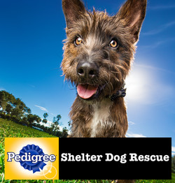 pedigree-shelter-dogs