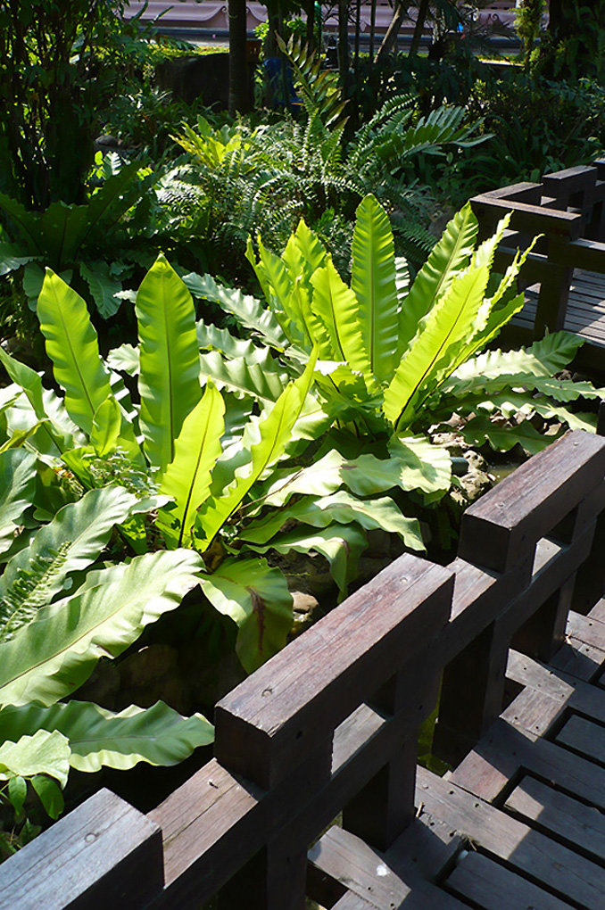 Antoine Roulet-Thailand-garden.jpg