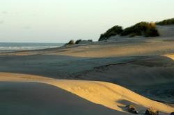 29-Bercq-sur-mer-343-dunes soir.jpg