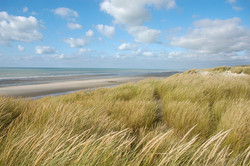 3-Bercq-sur-mer-396-dunes.jpg