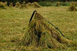 ©Antoine Roulet-Ireland-moisson blé