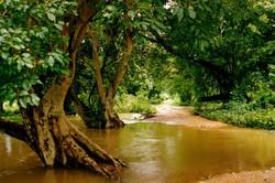 Antoine Roulet-Thailande-forest.jpg