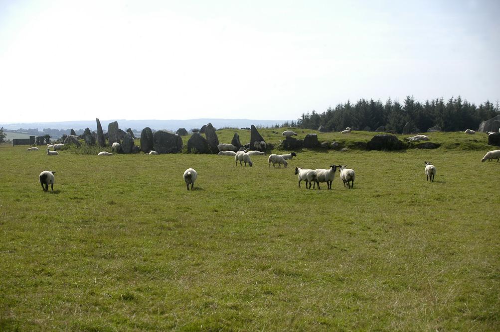 ©Antoine Roulet-Ireland-209-chèvres
