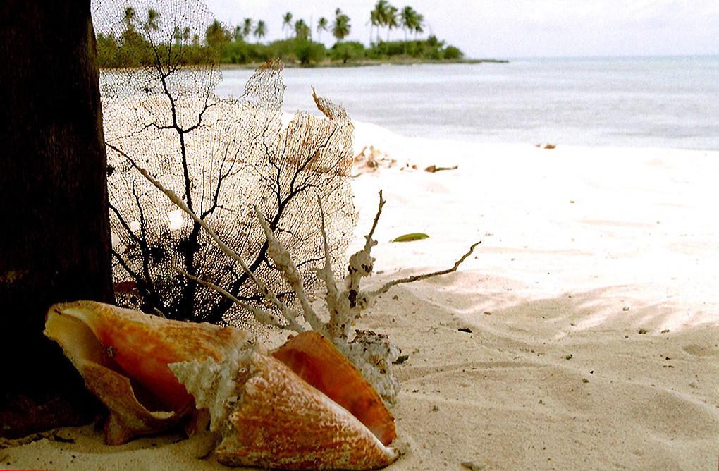 Antoine Roulet-Santo Domingo-shells-02.jpg