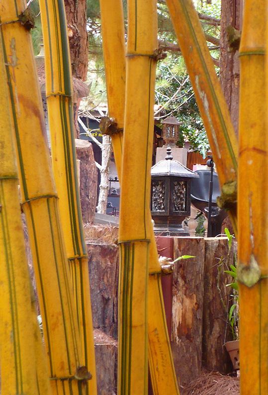 Viet07-Da Lat-garden-02.jpg