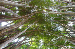 Antoine Roulet-Bamboo forest.jpg