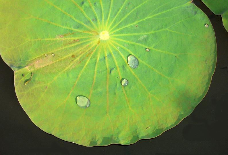 Viet04-Flower017.jpg